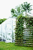 Greenhouse and ivy growing on trellis in garden
