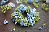 Small wreath of blue hydrangea florets and lady's mantel