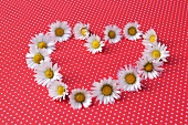 Heart shape of daisies on red and white spotted surface