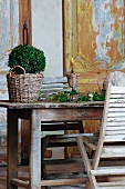Box bush in vintage wicker planter next to arrangement of leaves and candlestick on wooden table in front of wood-panelled wall with peeling paint
