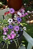 Pot of flowering spring plants on garden bench