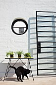 Port hole and glass door with lattice metal frame casting shadows; cat playing below plants on table
