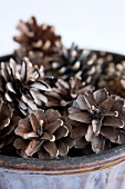 Dish of pine cones