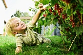 Germany, Bavaria, Boy picking red currants
