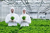 Germany, Bavaria, Munich, Scientists in greenhouse with parsley plant