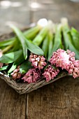 Pink hyacinths in flat, wicker basket on wooden surface