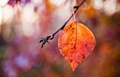 Autumn leaf on twig