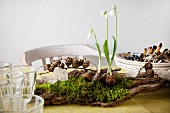 Table centrepiece: three snowdrops, moss, fir cones and honesty on piece of wood amongst stacked plates, cutlery and glasses