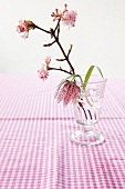 Snake's head fritillary (Fritillaria meleagris) and fragrant viburnum (Viburnum Charles Lamont) in drinking glass on gingham tablecloth