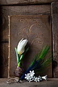 White tulip with bulb, white campanula flowers and peacock feather against old book