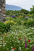 Corner of rustic Italian farmhouse with wild flower garden