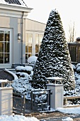Große, formgeschnittene Eibe in verschneitem Vorgarten