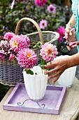 Woman arranging dahlias in vase in garden