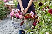 Woman holding basket of summer flowers in garden