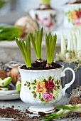Grape hyacinths in romantic teacup