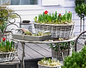 Various spring flowers in wicker planters on terrace