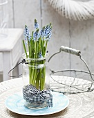 Grape hyacinths in jar with handle and gingham ribbon and wire basket on terrace table