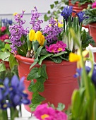 Terrace planter of bright spring flowers