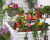 Bright spring flowers in planters and hanging basket on terrace