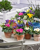 Pots of bright spring flowers on terrace table