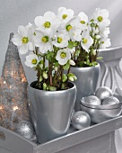 Hellebores in silver vases and conical woven lantern on silver tray