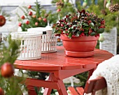 White baskets and wintergreen in red pot on red wooden table