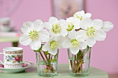 Two posies of hellebores in glass vases next to floral espresso cup
