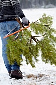 Man carrying cut Christmas tree through the snow