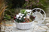 Autumn arrangement of cyclamen, narcissus bulbs, euonymus, wintergreen and tealight holder in white basket on metal garden table