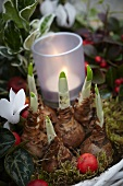Autumn arrangement of cyclamen, narcissus bulbs, euonymus, wintergreen and tealight holder in basket (close-up)