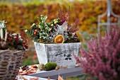 Autumnal arrangement of heather, ornamental chillies, Leucophytha brownii and euonymus in wooden crate on wooden garden table