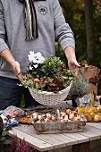 Man presenting autumn arrangement of cyclamen, wintergreen and ivy in basket and bulbs on tabletop