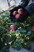 Creating a Christmas arrangement of fir branches, red apples and sprigs of mistletoe