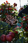 Creating a Christmas arrangement of fir branches, wintergreen, mistletoe, bay, apples and pine cones (close-up)