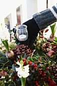 Adding tealight holder to Christmas arrangement of fir branches, wintergreen, bay, apples, hyacinths and pine cones