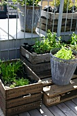 Plants in wooden crates and metal planter on roof terrace