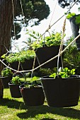 Plants in garden buckets hanging from ropes