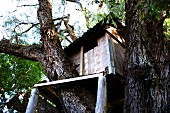 DIY treehouse made of planks wedged amongst tree trunks