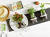 Einmachgläser an graues Paneel geschraubt mit Küchenkräutern bepflanzt