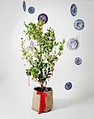 Mit runden Anhängern als Weihnachtsbaum geschmücktes und von schwebenden Blauweiss-Tellern umgebenes Zitronenbäumchen