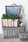 Natural finds in preserving jars and forget-me-nots in window box made from driftwood on weathered wicker basket