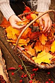 Hands of young girl and basket of collected autumn leaves and fruits