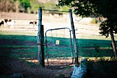 Rickety gate in wire fence surrounding cattle pasture