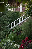 Flowering gardens with flight of steps and white, stone balustrade