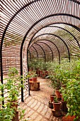 Potted plants in tunnel-shaped greenhouse with slatted shades