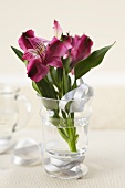 Peruvian Lilies on a Glass with Ribbon