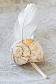 Snail shell on a white feather