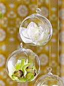 Hanging glass balls with orchid flowers