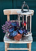 Rex begonia, heather & vintage lantern on rustic wooden chair