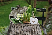 Spring basket with English daisies and hanging heart ornament on a garden chair